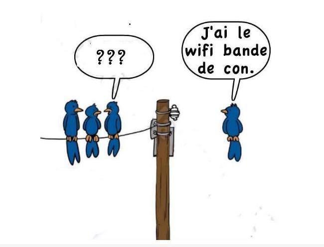 La wifi des oiseaux
